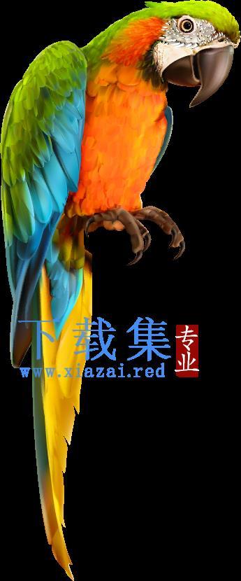 鹦鹉动物AI矢量素材