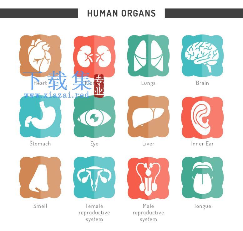 12个人体器官图标AI矢量素材  第1张