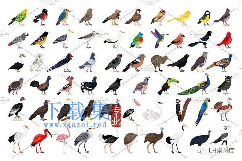 鸟类手绘矢量素材  第2张