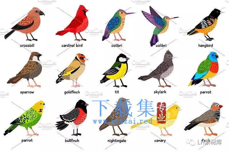 鸟类手绘矢量素材  第3张