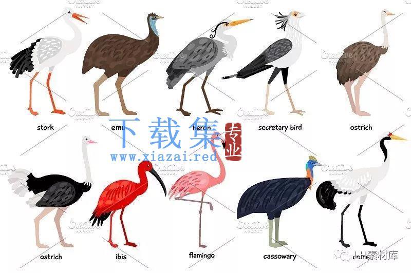鸟类手绘矢量素材  第4张