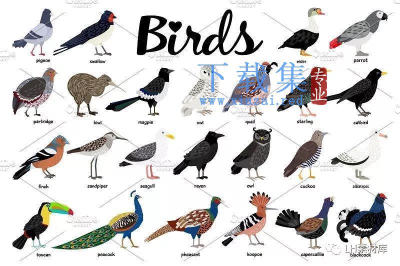 鸟类手绘矢量素材  第6张