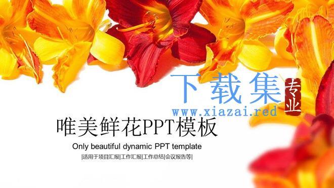 鲜艳花卉背景唯美PPT模板免费下载