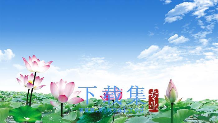 鲜艳荷花莲花PPT背景图片  第1张