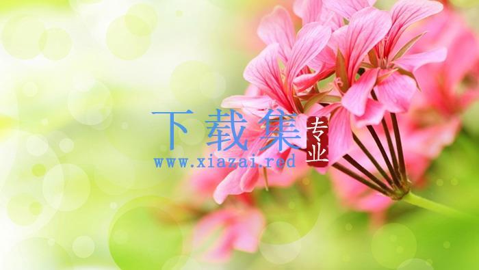 清新花朵PPT背景图片  第1张