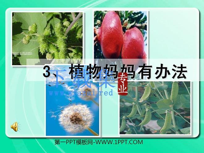 《植物妈妈有办法》PPT教学课件下载3  第1张