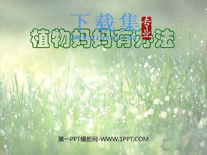 《植物妈妈有办法》PPT教学课件下载4  第1张