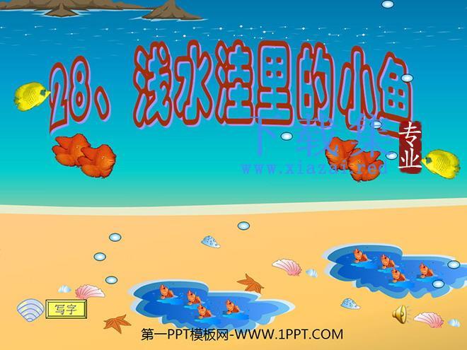 《浅水洼里的小鱼》PPT教学课件下载4  第1张
