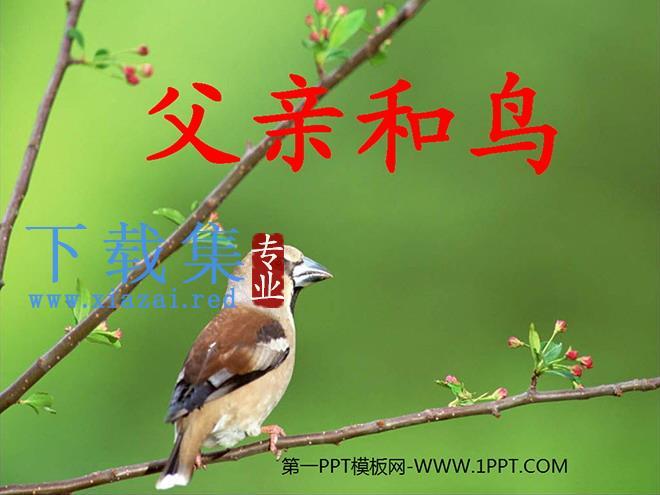 《父亲和鸟》PPT教学课件下载5  第1张
