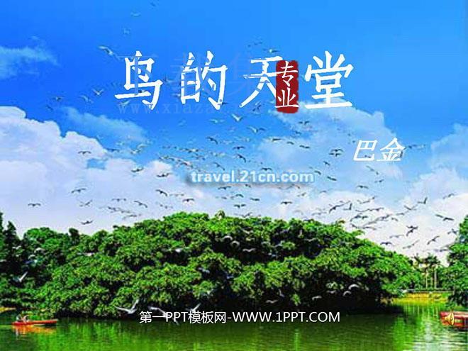 《鸟的天堂》PPT教学课件下载4  第1张